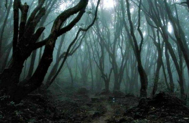 les v rumunsku