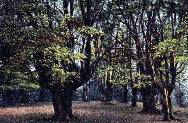 epping les v Anglicku