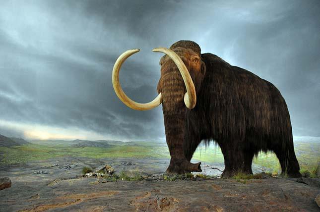 zivot mamutov