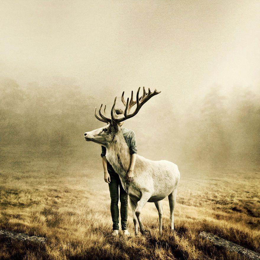 fotografia zvierat v divocine