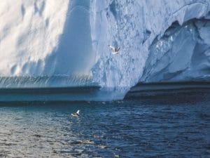 Arktída sa topí rýchlejšie ako iné miesta na svete Fotograf z NY City Diane Tuft sa rozhodol dokumentovať oblasť aby odhalil vplyvy Globálneho oteplovaniaa poukázal na fakt že táto krajina zmizne navždy Počas leta 2015 a 2016 Tuft cestoval lietadlom loďou a vrtuľníkom kvôli fotografovanie horských ľadovcov Svalbard Nórsko morského ľadu v Arktíckom oceáne a ľadových bergov a ľadového listu Grónska vypovedajúcich o sebe neuveriteľnú krásu a krehkosť Regiónu