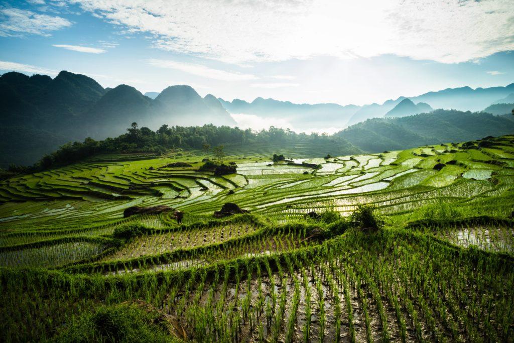Vietnam nadherne ryzove polia