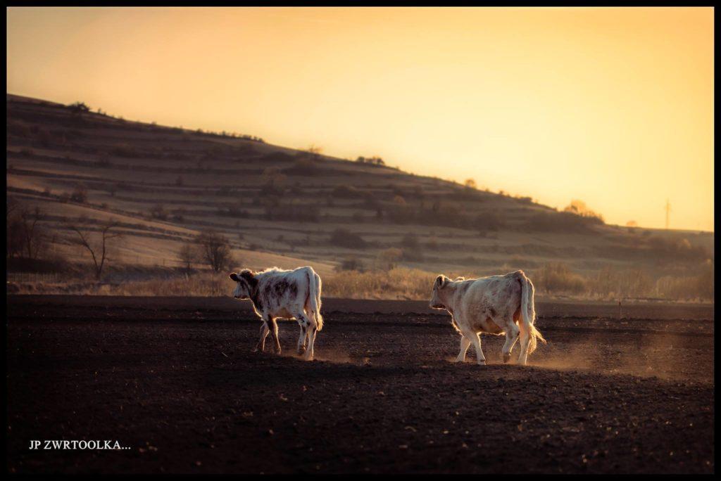 kravy zalubica vynikajuce svetlo pozovanie