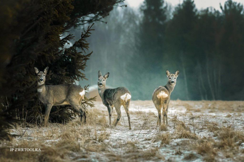 Mysteriózny les srnky Stara Lesna