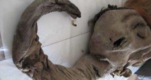 Mamut srsnaty spred 28 000 rokov