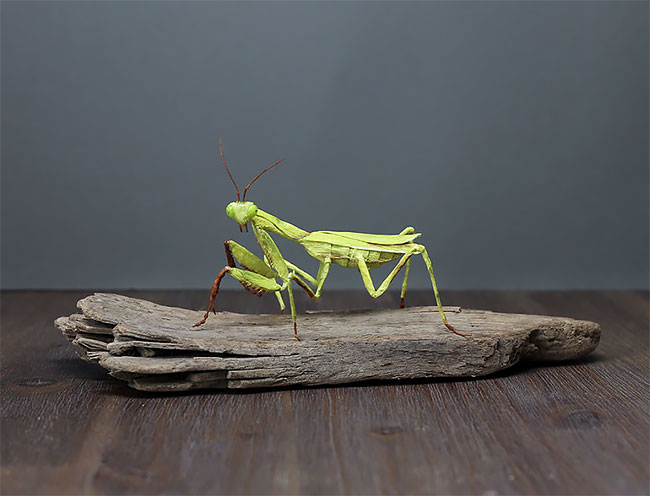 Realistické papierové modely hmyzu a rôznych zvierat