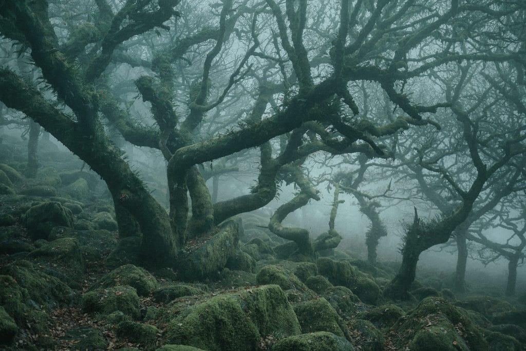 Tajomny les ako z Tolkienovych svetov