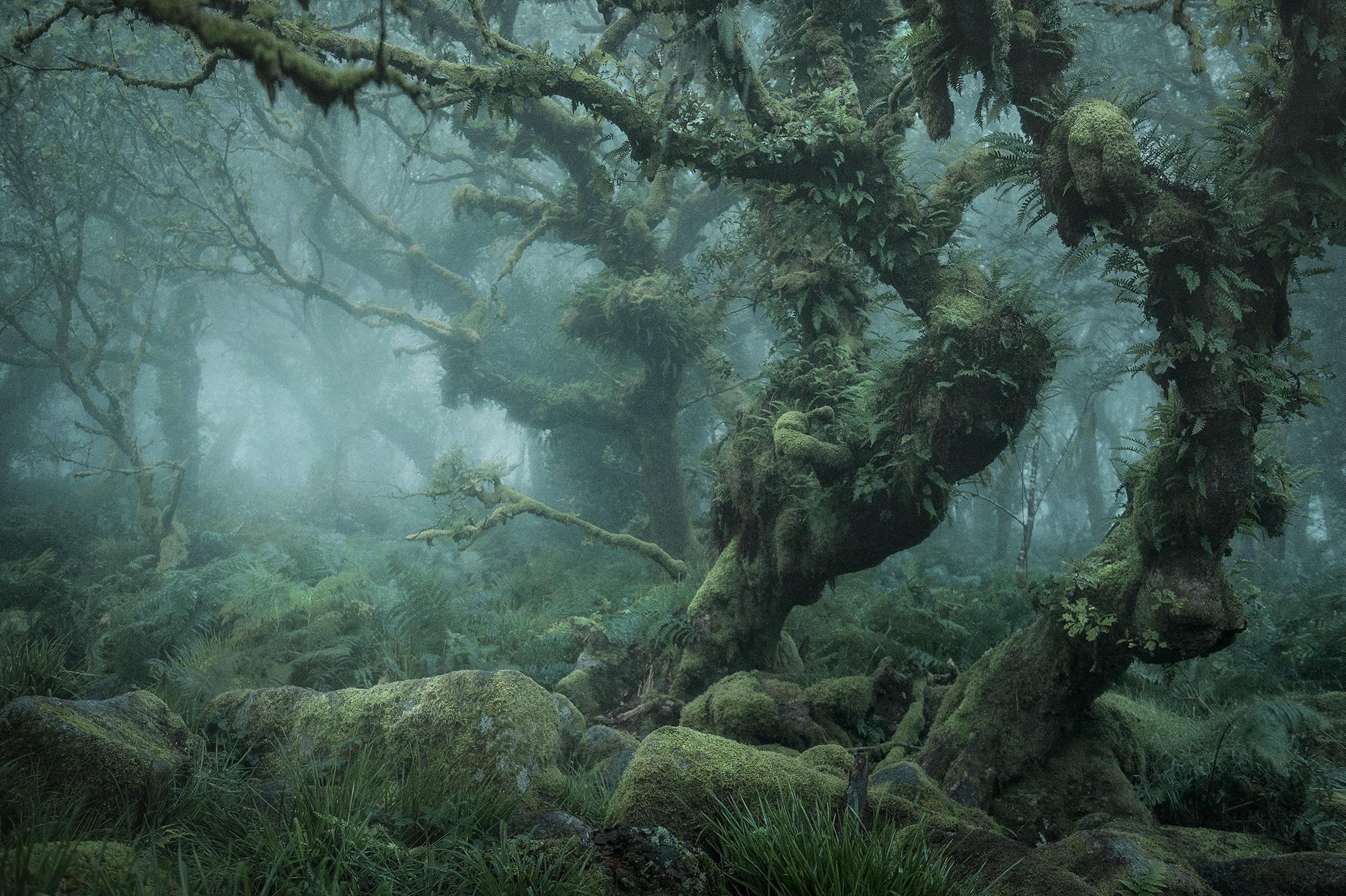 Trvácna krása tajomného lesa ako vytrhnutá z Tolkienovho sveta